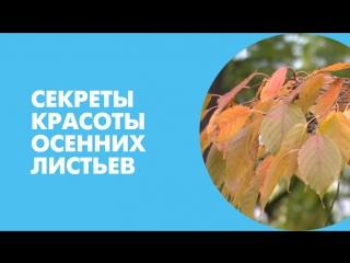 Секреты красоты осенних листьев