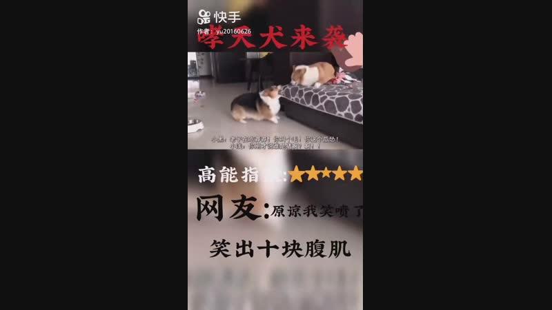 狗狗大作战