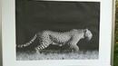 Картина на Холсте Леопард Бренд: Hey_Art от Магазина: Art_Prints_Store