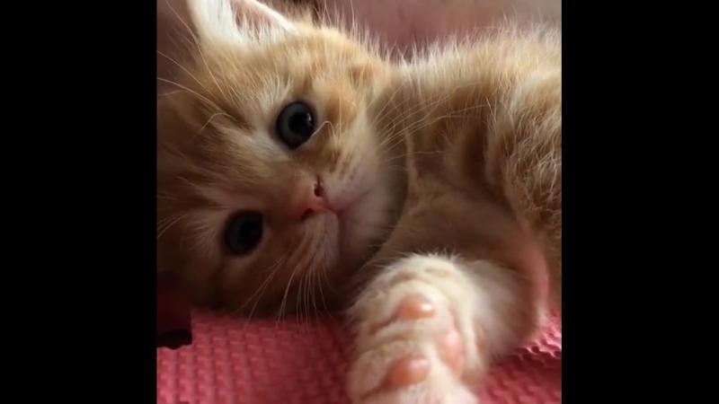 Алкоголик Игорь не мог понять, как кошки пьют молоко, до тех пор, пока не разбил об пол кухни 0.5 Водки.
