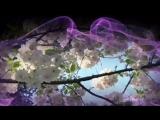 Stamatis Spanoudakis - Spring of life