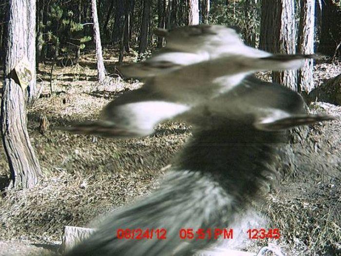 Странные снимки животных, сделанные при помощи фотоловушек