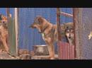 Полтавці проти жорстокого поводження з тваринами