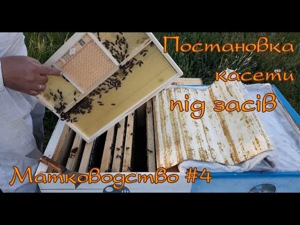 Матководство 4 Підготовка до виводу маток Постановка касети під засів
