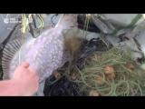 Появилось видео задержания в Черном море украинского браконьерского судна