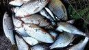 Рыбалка на реке Колокша (фильм 2)