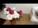 101 ДАЛМАТИНЕЦ ♥ Фотосессия с далматинцами-cogo--scscscrp