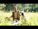 Охота с легавыми собаками на Аргаяшских угодьях
