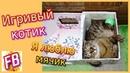 FB Смешной кот Жулик играет с мячиком в домике для кукол