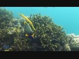 3 часа фантастический подводные кадры + расслабляющая музыка Французская Полинезия, Индонезия