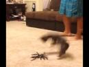 вот какой паук