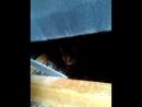 ссаная кошка