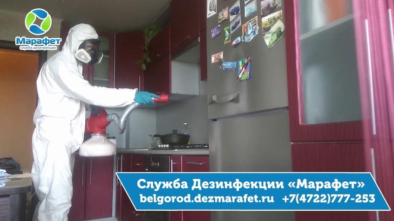 Уничтожение муравьев в Белгороде - ДезСлужба Марафет