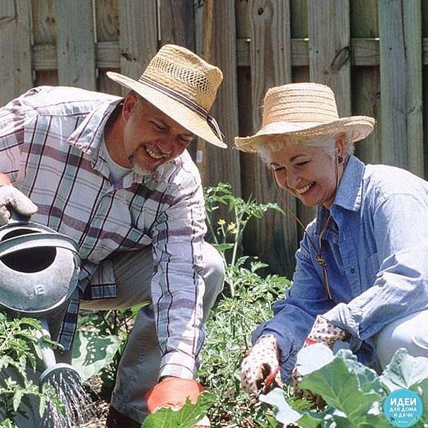 дачные помощники, обязательно нужно иметь на даче : борная кислота: всегда пригодится в дачном хозяйстве. если загнивают плоды кабачков или цуккини, если томаты в теплице переживают стресс от