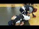 Спортивный клуб Юстас тренировки по ММА, бойцы рвали всех!