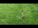 крольчиха напала на змею