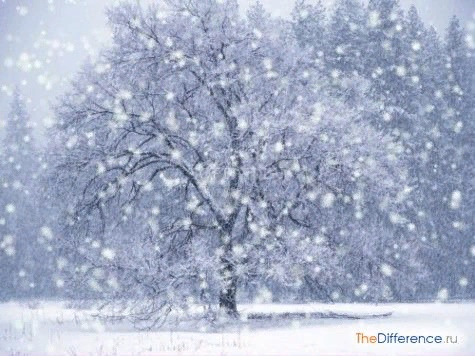 Разница между снегом и дождем Снег и дождь относятся к осадкам, выпадающим из облаков. В каждом случае их частичкам приходится преодолеть немалое расстояние, прежде чем коснуться земной