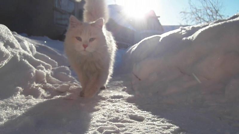 Первый снежок и бывалый кот Снежок