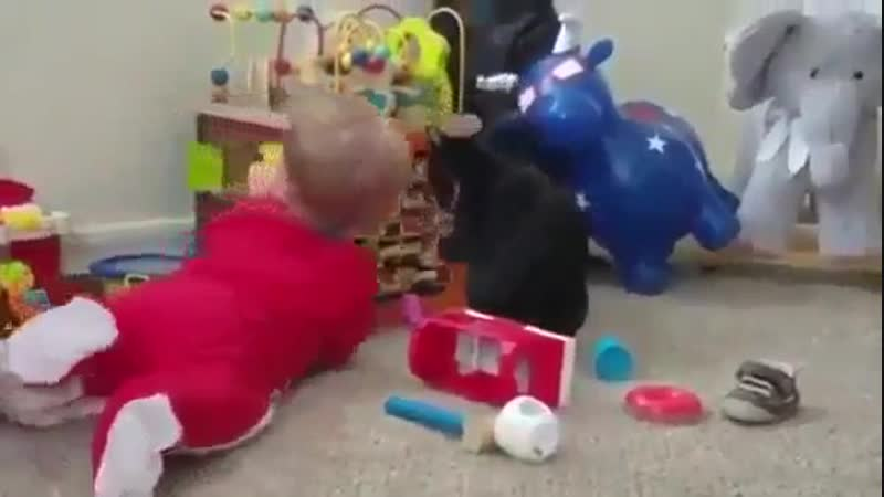 Купили новую игрушку, тенерь все при деле...