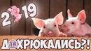 ХРЮ ХРЮ МУЛЬТПЕРЕПОЛОХ Игры конкурсы на праздник Новый год свиньи 2019