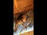 Дуняша пришла в гости и устроила дистрой