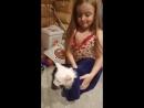 Котята Мейн кун Aurum Oc... - Live