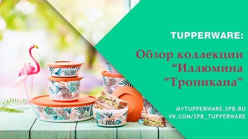 Tupperware: Обзор коллекции Иллюмина Тропикана