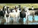 Melodía INCA 'chuklla'