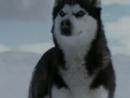 Клип про любовь и преданность собак Из фильма Белый плен.480.mp4