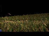Assassins Creed- Rogue (Изгой) [RU]-Трейлер