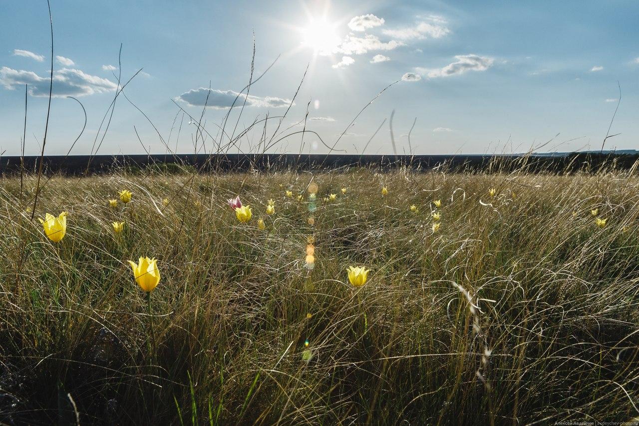 яйца дикое поле фотографии изображения пикселях