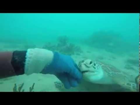 Friendly Sea turtle