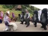Брачный дино-танец для невесты. Видео приколы