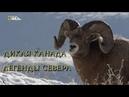 Nat Geo Wild Дикая Канада Легенды Севера 1080р