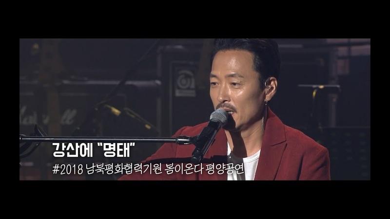 명태 강산에 2018 봄이온다 평양공연 Live (가사/Lyrics)