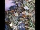 спрятался грибочек