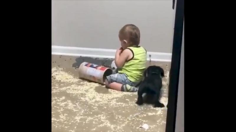 Говорят, что собаки - лучший друг человека, мы говорим, что они семья 🐶