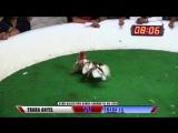 Pelea #11 TRABA ANYEL Vs TRABA J.G. 1606198 - Club Canca