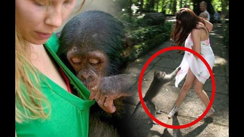 Bisa Aja Nih Kelakuan Si Monyet wkwk