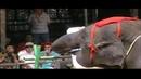 Pattaya Nong Nooch Шоу слонов