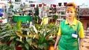ТОП 10 самых легких в уходе комнатных растений от компании ВАШ САД