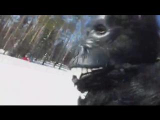 Шок! жесть! Смотреть до конца! Снежный человек нападает на лыжника на тропе Йети ЦАО Евразия в городе Куса