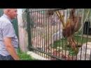 Герасечкин и орангутаны или Бартер орехов на тряпочки