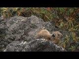 Природа Японии.p2.Русский BluRay.720p