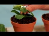 Шоколадный мусс в горшочке (Chocolate Mousse Flower Pot)