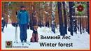 Зимний лес Winter forest Катание на лыжах собака эрдельтерьер Rukodelie Goplay RG