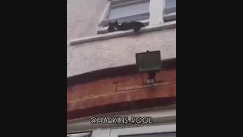 злой аварец и страшный кот [MDK DAGESTAN]