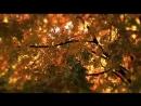 Черный кофе Листья - С ветки падающий лист
