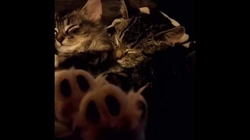 Кошки такие милые создания