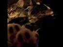 Кошки - такие милые создания!